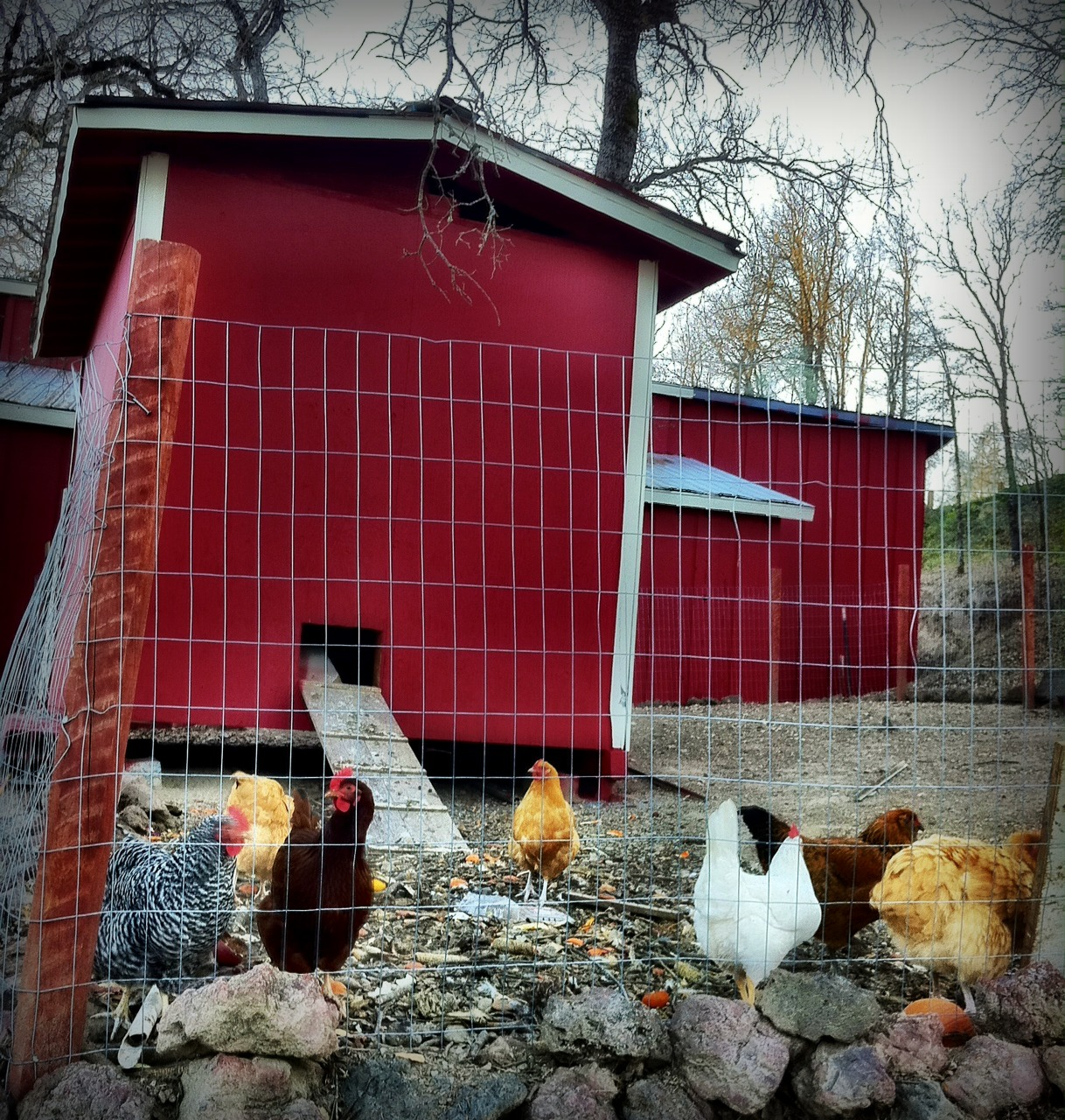 Riddlelove the big red barn for Red chicken coop