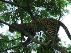 န Alipurduar, 5 June :