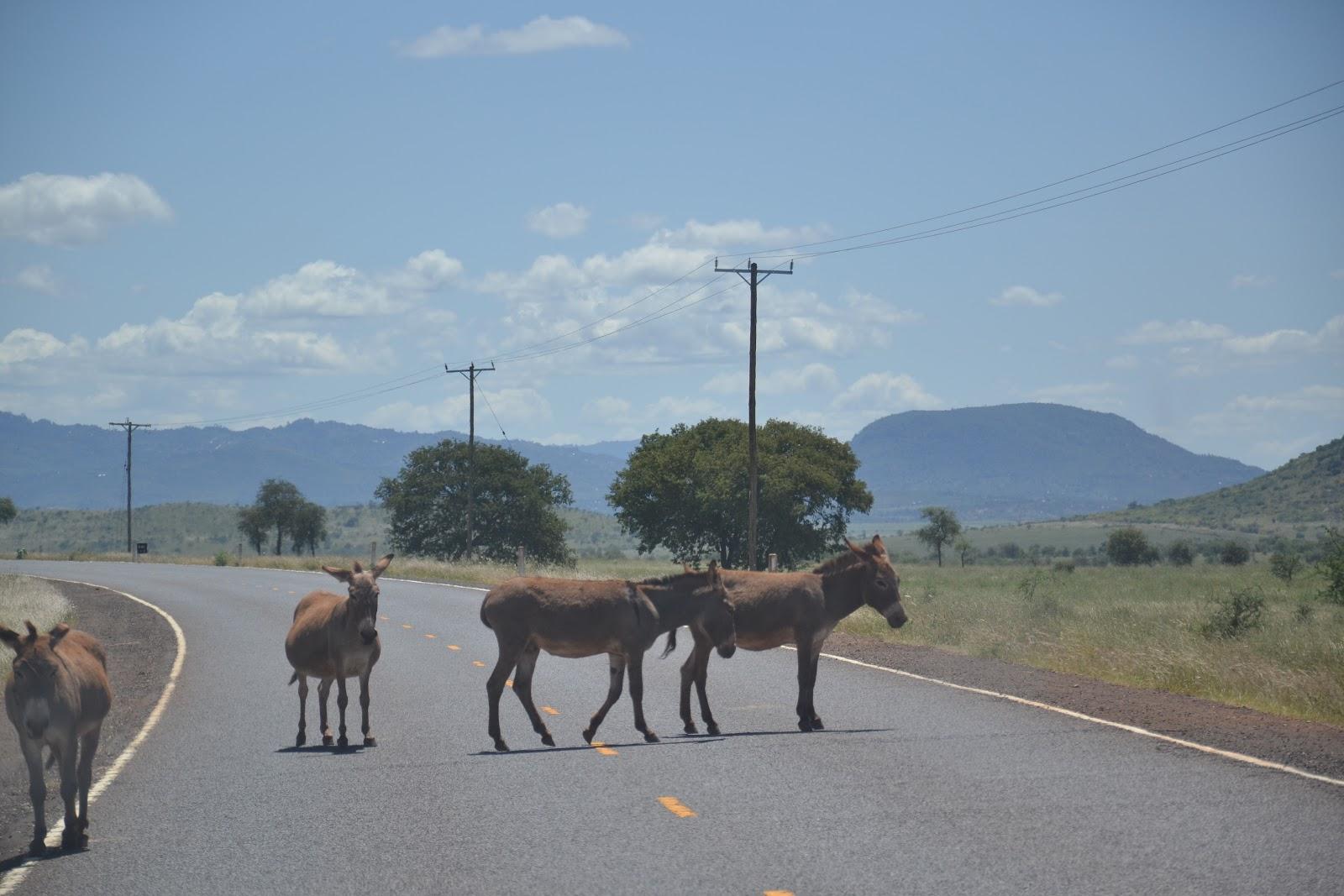 GIRAMONDO!: Cosas que pasan en las carreteras de Africa