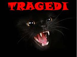 Tragedi Kucing Hitam