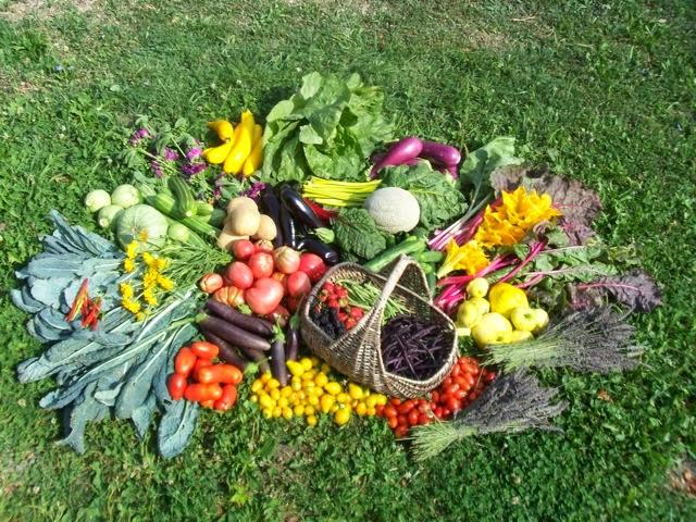 Posso vendere i prodotti del mio orto for Vendita piante orto