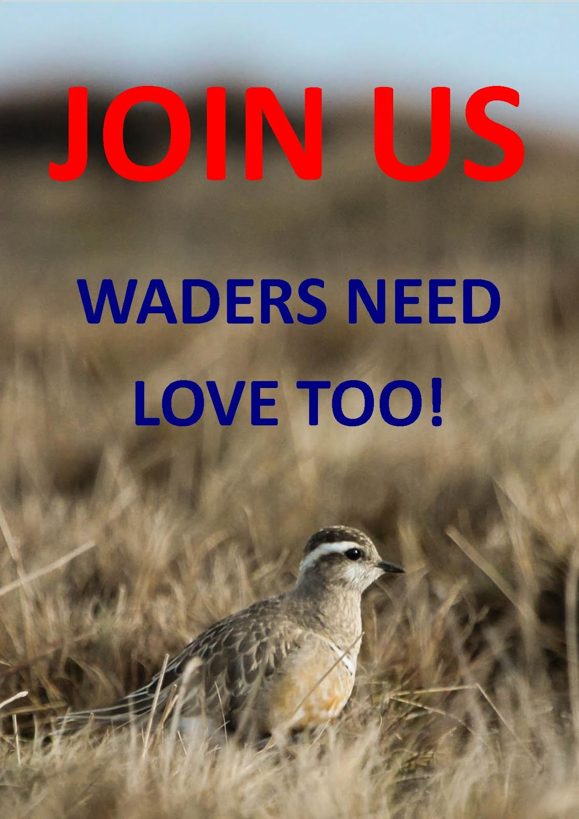 CLICK ON THE DOTTEREL PHOTO FOR DETAILS OF HOW TO BECOME A FRIEND OF WADER QUEST.