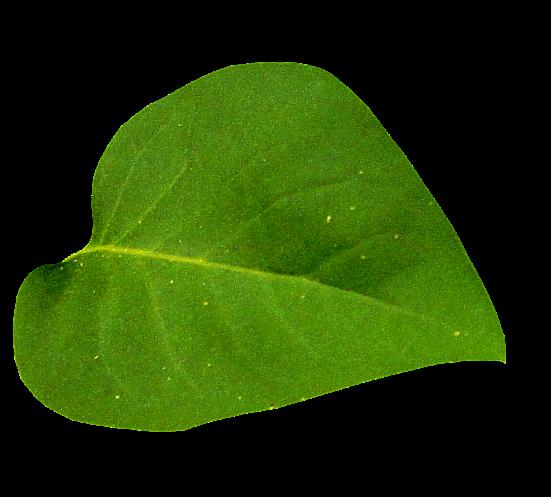 Marcos gratis para fotos for Arboles de hojas perennes para veredas