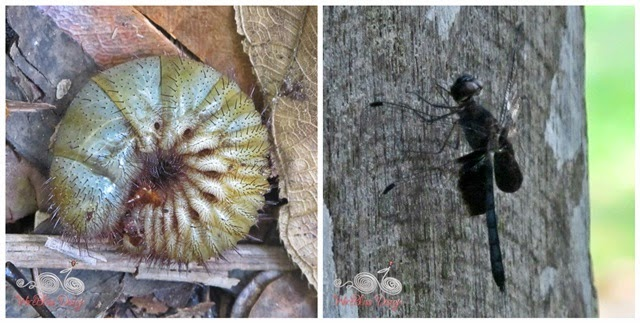 Bako National Park - insects - WireBliss