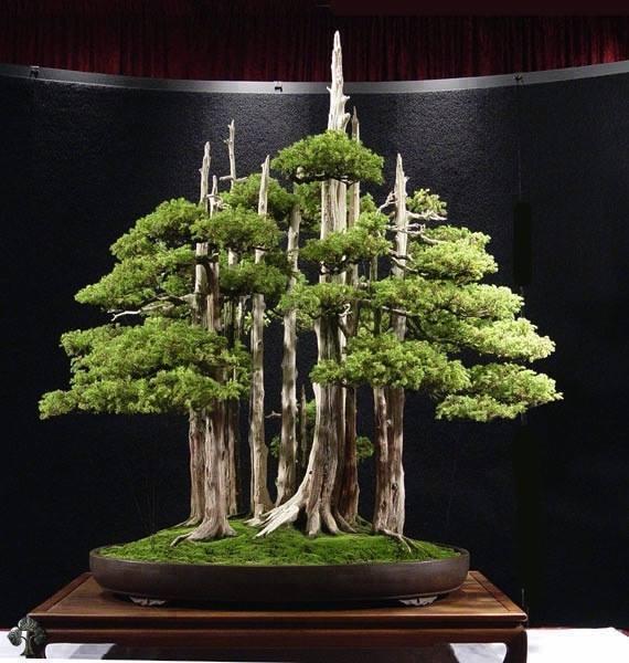 pohon bonsai yang unik