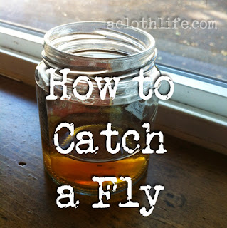 how to combat fruit flies