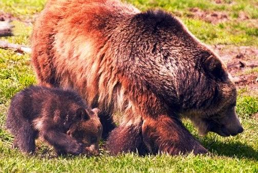 Enhancing Montana Wildlife-Habitat