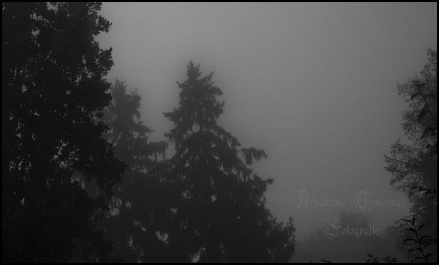 Eine Tanne im dichten Nebel