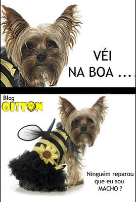 véi na boa cachorro abelha, veinaboa abelha, véi na boa meme cachorro saia, imagens engraçadas internet, fotos engraçadas animais, rir