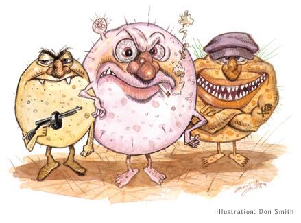 Grupo escape eskape bacterias duras de tratar