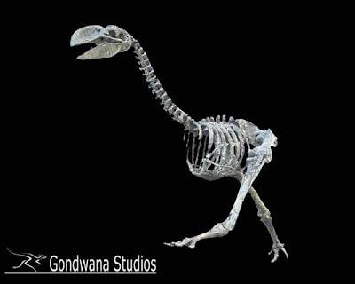 Dromornis skeleton