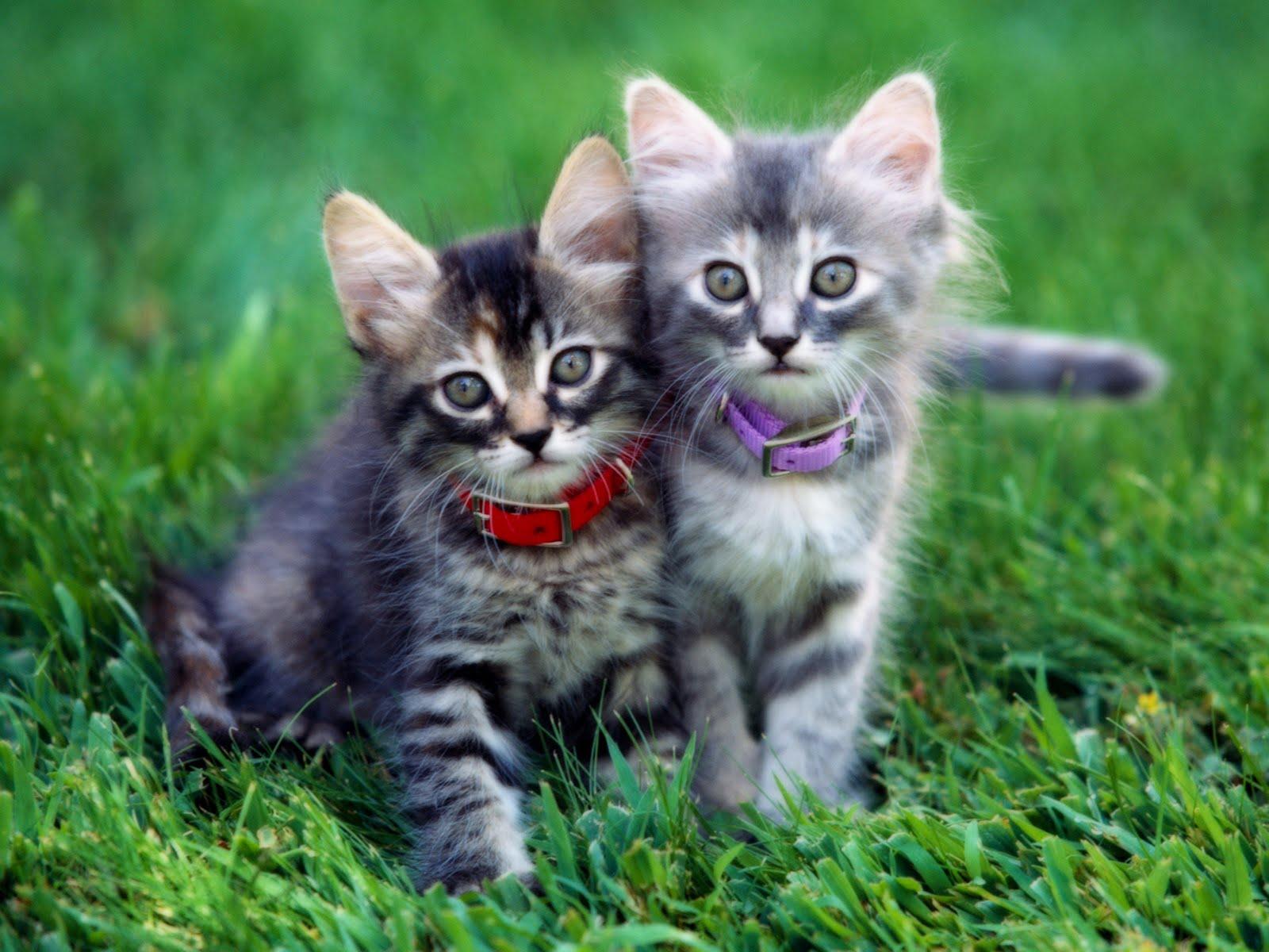 HD Wallpaper of Cute Cat | HD Wallpapers