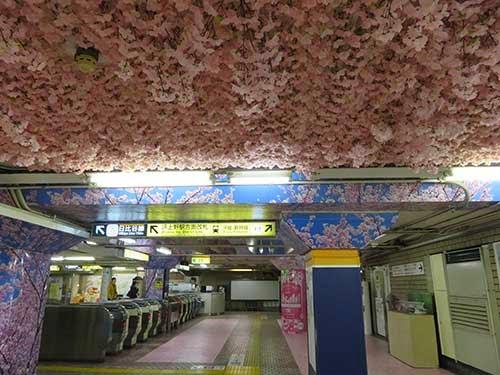東京メトロ銀座線の上野駅に桜が彩った005