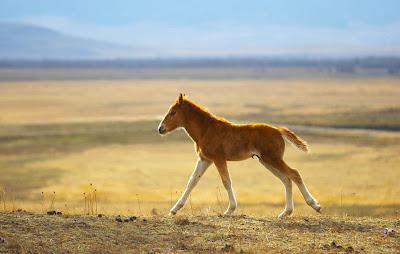 Una hermosa potranca en las praderas - Colt