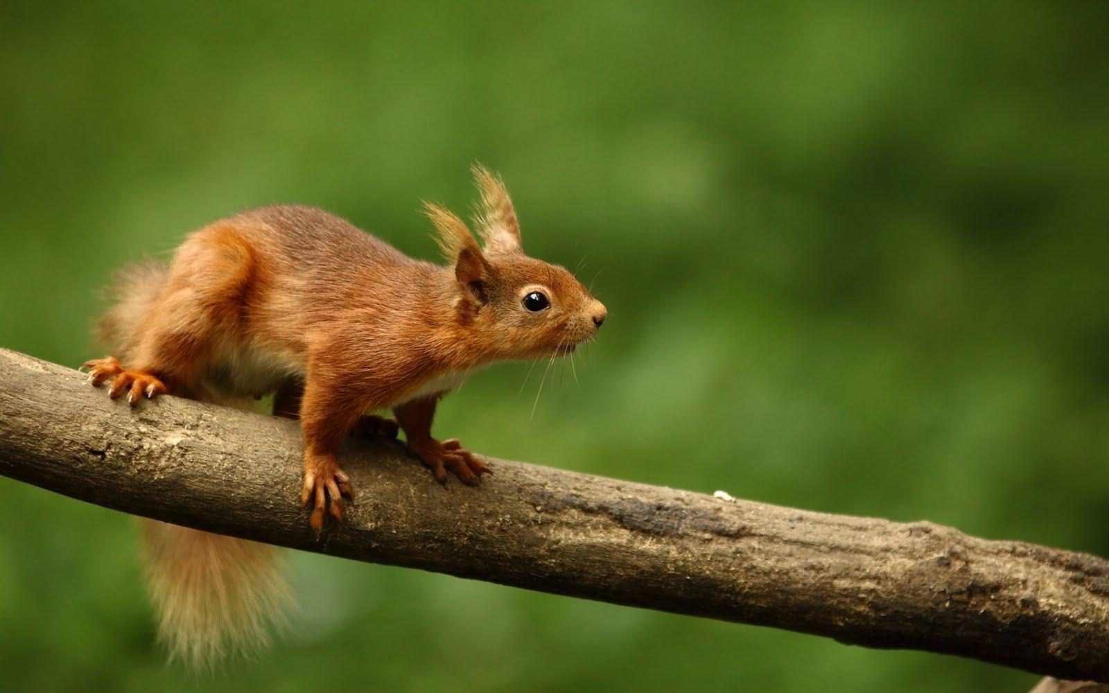 Una linda ardilla - Cute squirrel