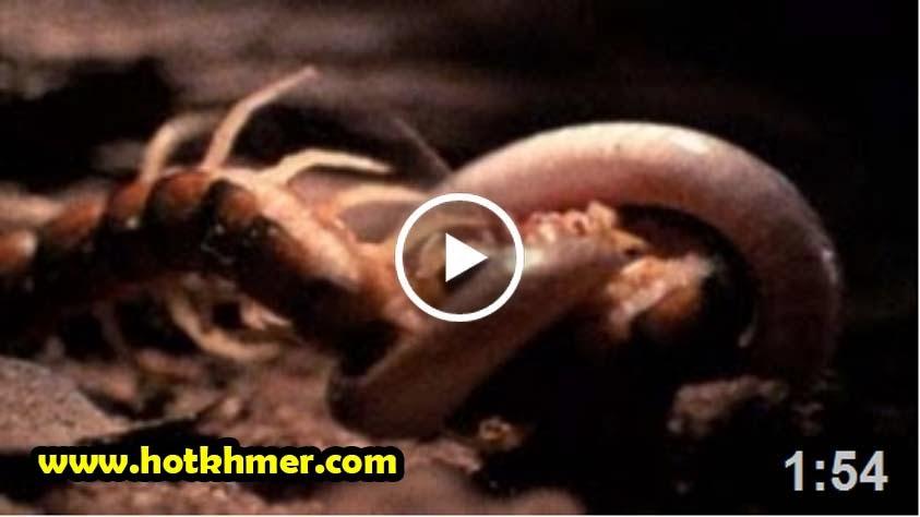 Snake vs. Centipede