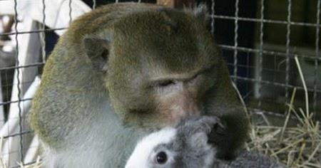 Hewan Yang Bersahabat Dengan Hewan Lain Kyuhyun Si Cakep