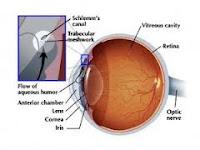 Cara Mencegah Penyakit Mata