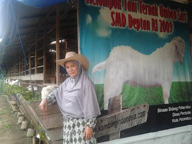 Aktivitas Sarjana Membangun Desa