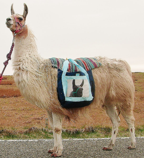 It is not just a walk but an education.   Learn the truth about llamas on a trek.