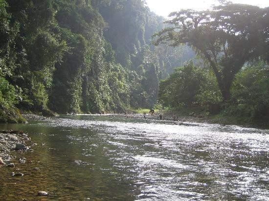 Objek wisata Bukit Lawang Sumatera Utara 4