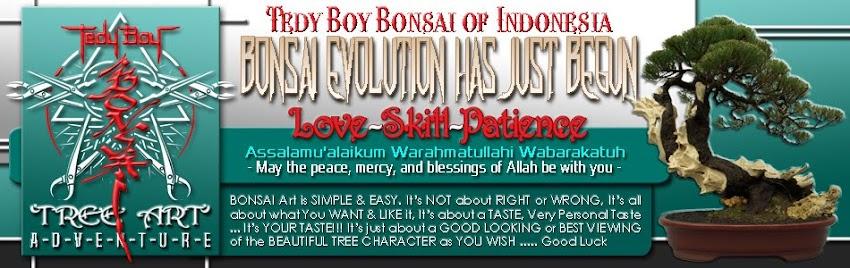 bonsai tree bonsai designs bonsai usa bonsai europe bonsai america bonsai japan bonsai china