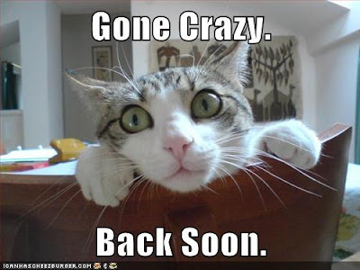 Image result for funny wednesday cat images