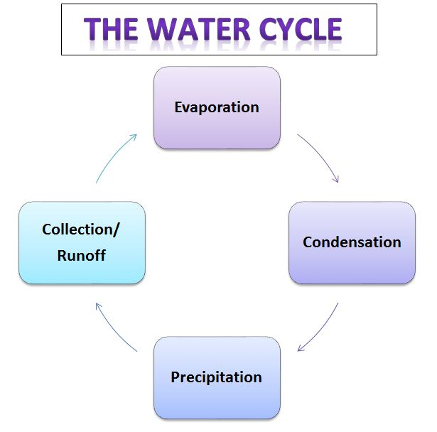 learning ideas   grades k    the water cycle with ms  frizzlei have a handout   a  color  cut  paste  diagram of the water cycle that uses the  vocabulary terms to help students learn the vocabulary