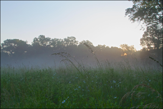 """Dawn at Primrose Farm,"" by Ashleigh Scully, Morristown, NJ. Copyright ©2013 Great Swamp Watershed Association."