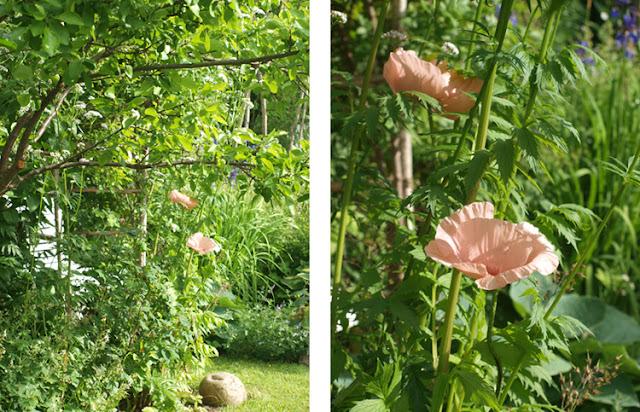 Den vilde have med frodige bede med baldrian og kæmpevalmuer