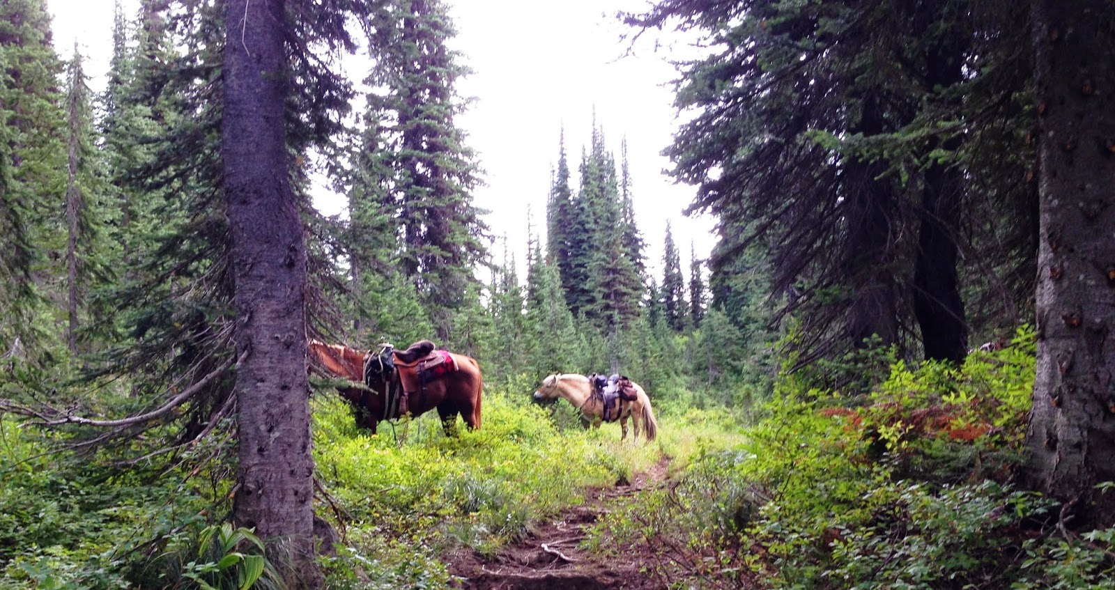 Selkirk Valley Back Country Horsemen