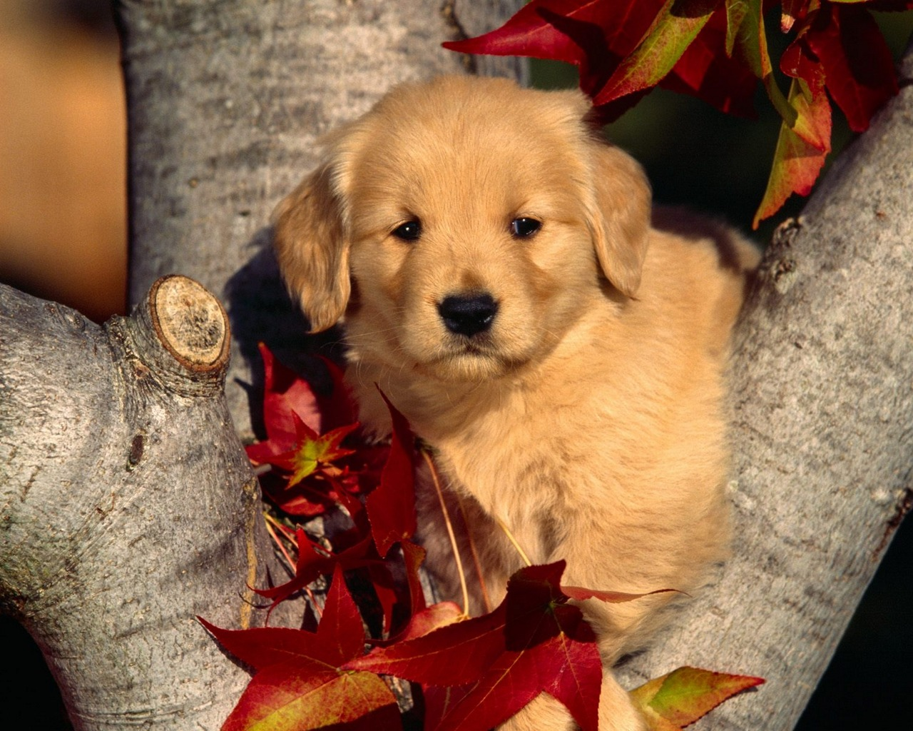 New for Dog Wallpaper Cute Funny Beautiful Puppies