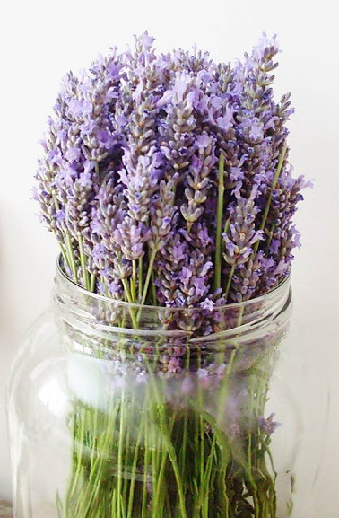 Lavender - a powerful antiseptic