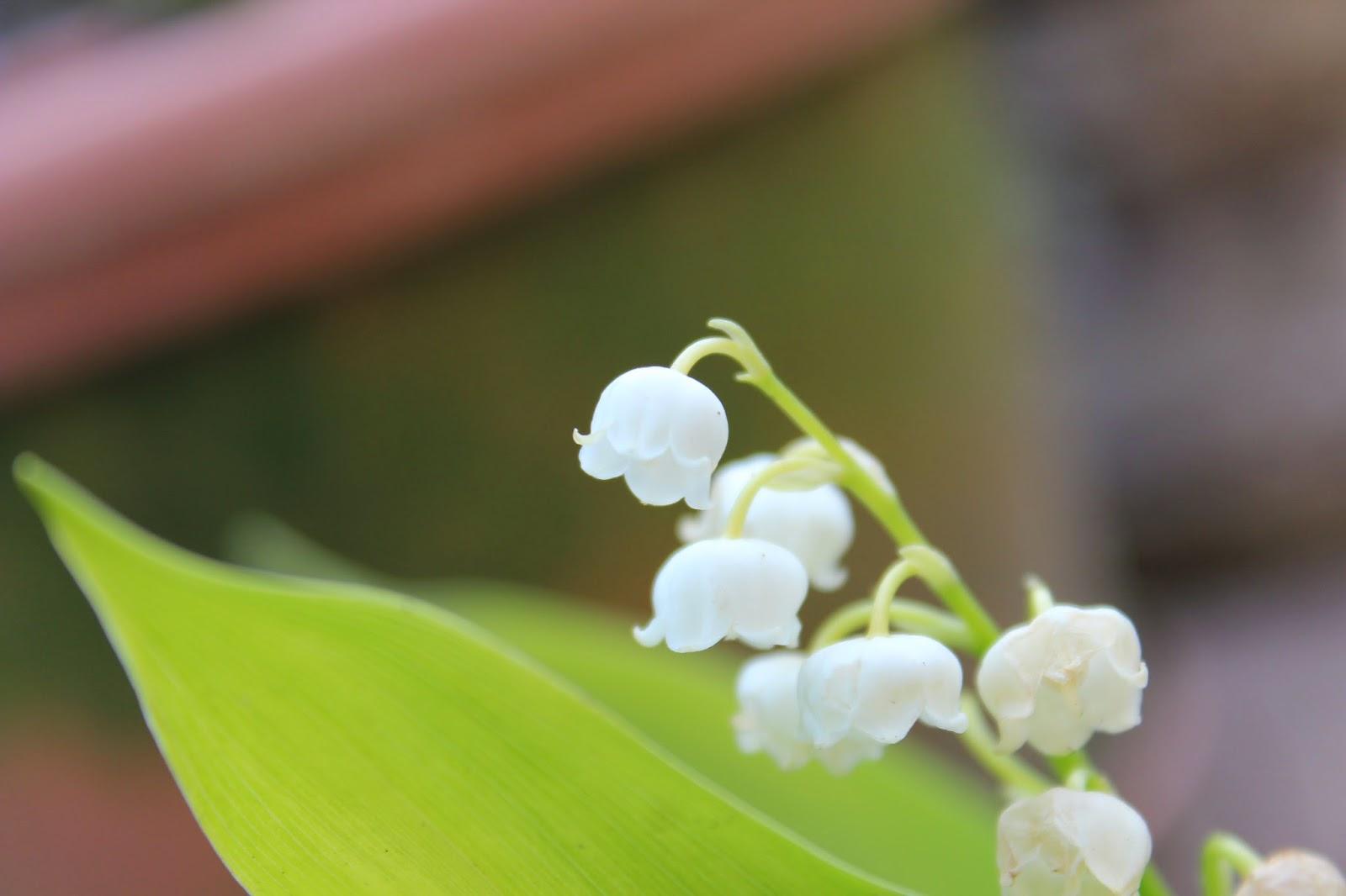 Blumen im märz  happy nature working cooking living: Blumen im März