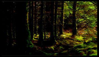 ~Bosques