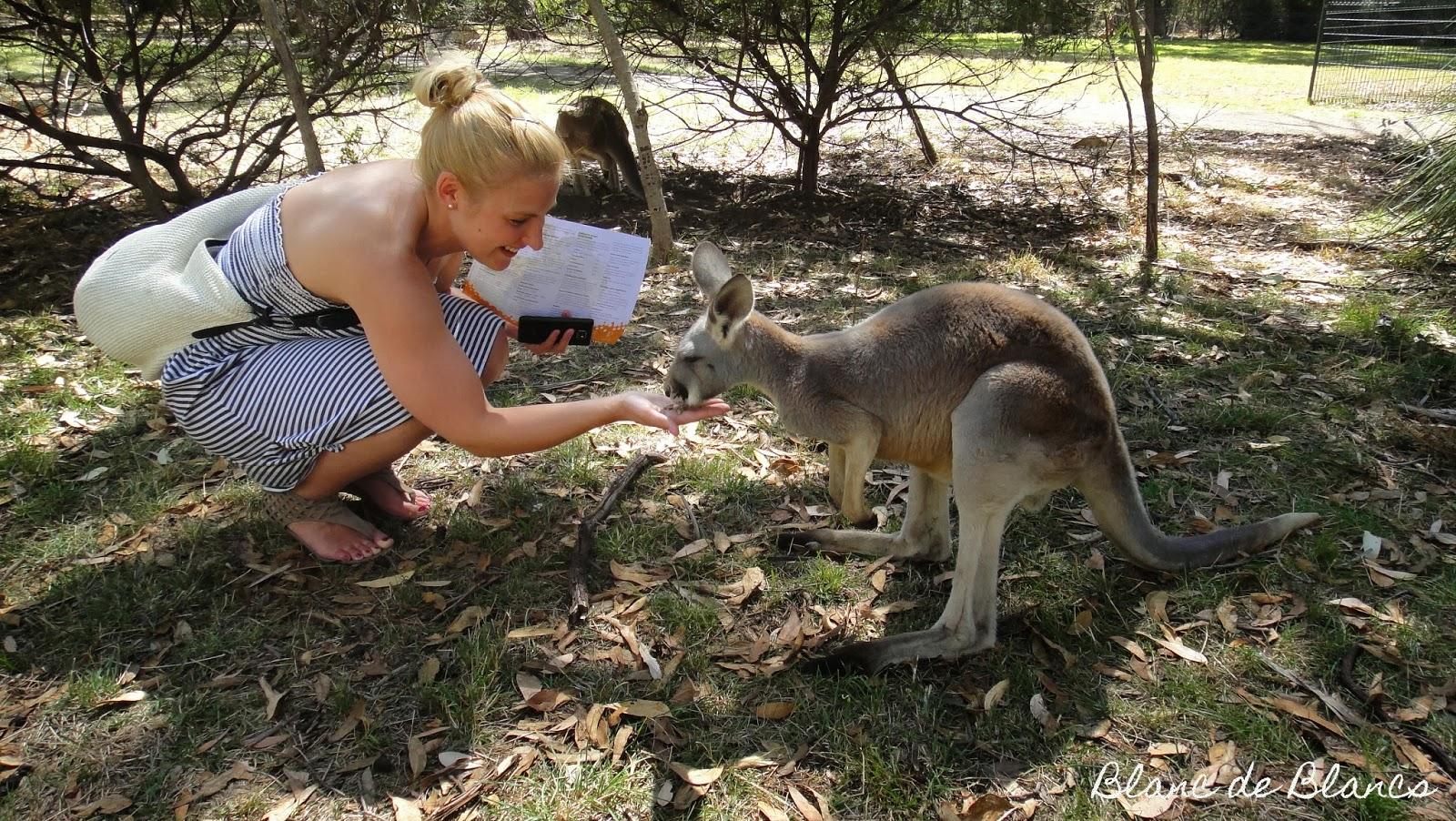 Kenguru ja Australia - www.blancdeblancs.fi