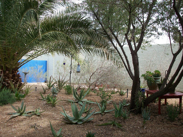 the block and stucco walls in this desert backyard define the space