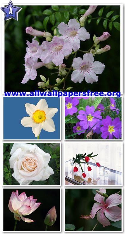 100 Beautiful Flowers Wallpapers 1280 X 1024 [Set 2]