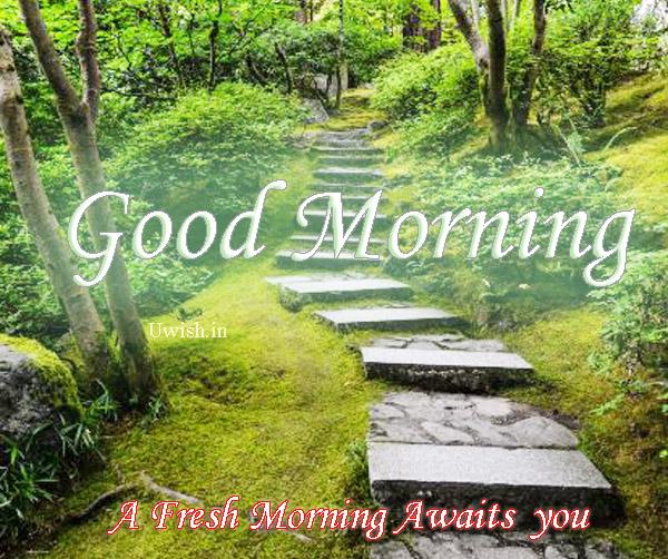 Good Morning - A fresh morning awaits you