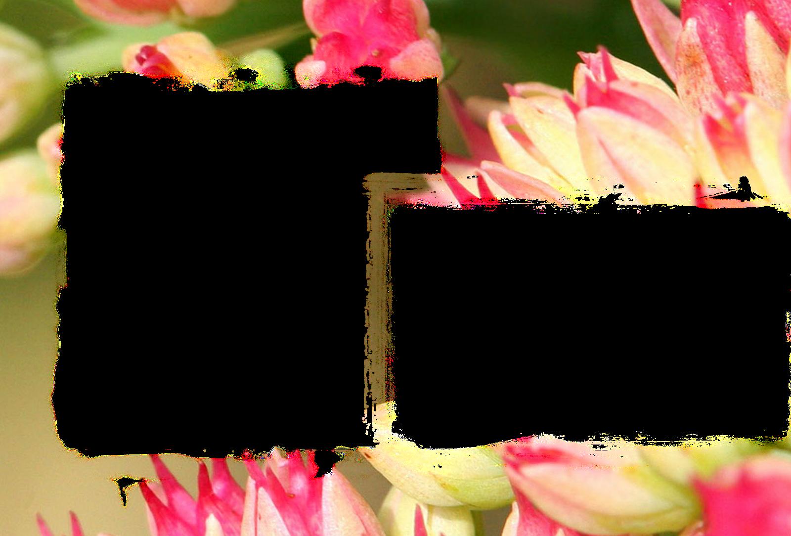 ... love frames_marriags frames_weddings frames_ birthday frames_flower