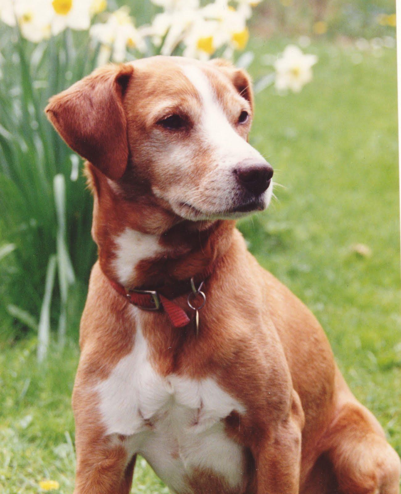 Forgotten Friends Dog Rescue