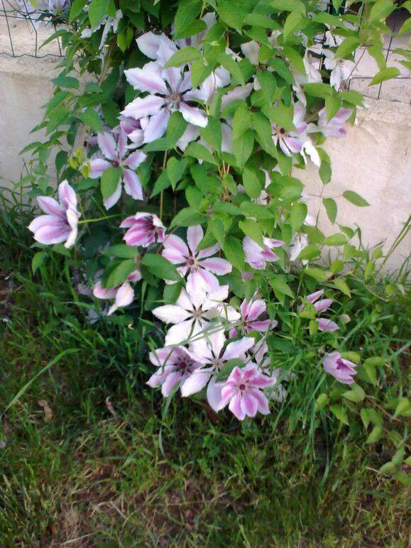 Le plaisir du jardin le bon arrosage des plantes d 39 int rieur for Arrosage plante interieur