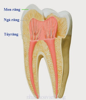 7 nguyên nhân khiến răng ê buốt bạn nên tránh 3
