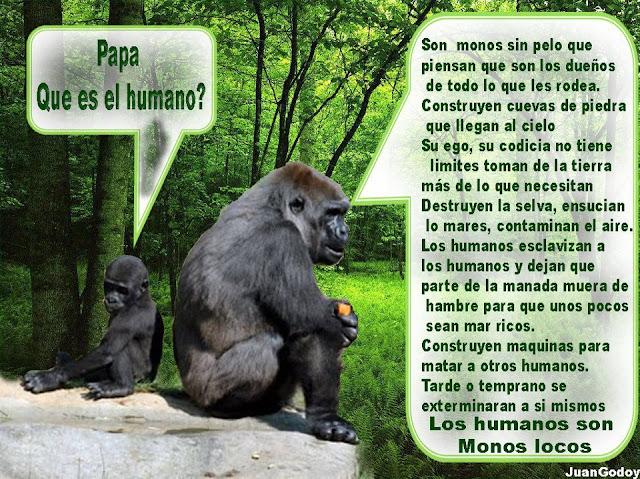 LOS HUMANOS SON MONOS LOCOS