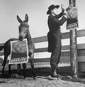 Cowboy Dom recherché par le sheriff