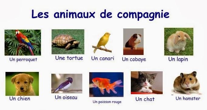 Super Blog DV Français: Animaux de compagnie KH69