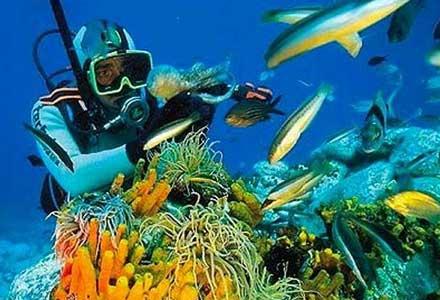 http://2.bp.blogspot.com/-MhkWVD1q5Hc/UQ6YSGDyhRI/AAAAAAAADOE/On6qJJncrc8/s400/diving.jpg