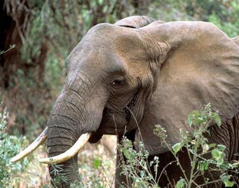 An Elephant a Day: Ele...