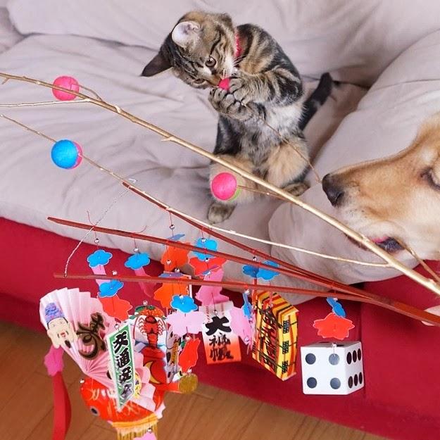 Ichimi the orphan kitten1
