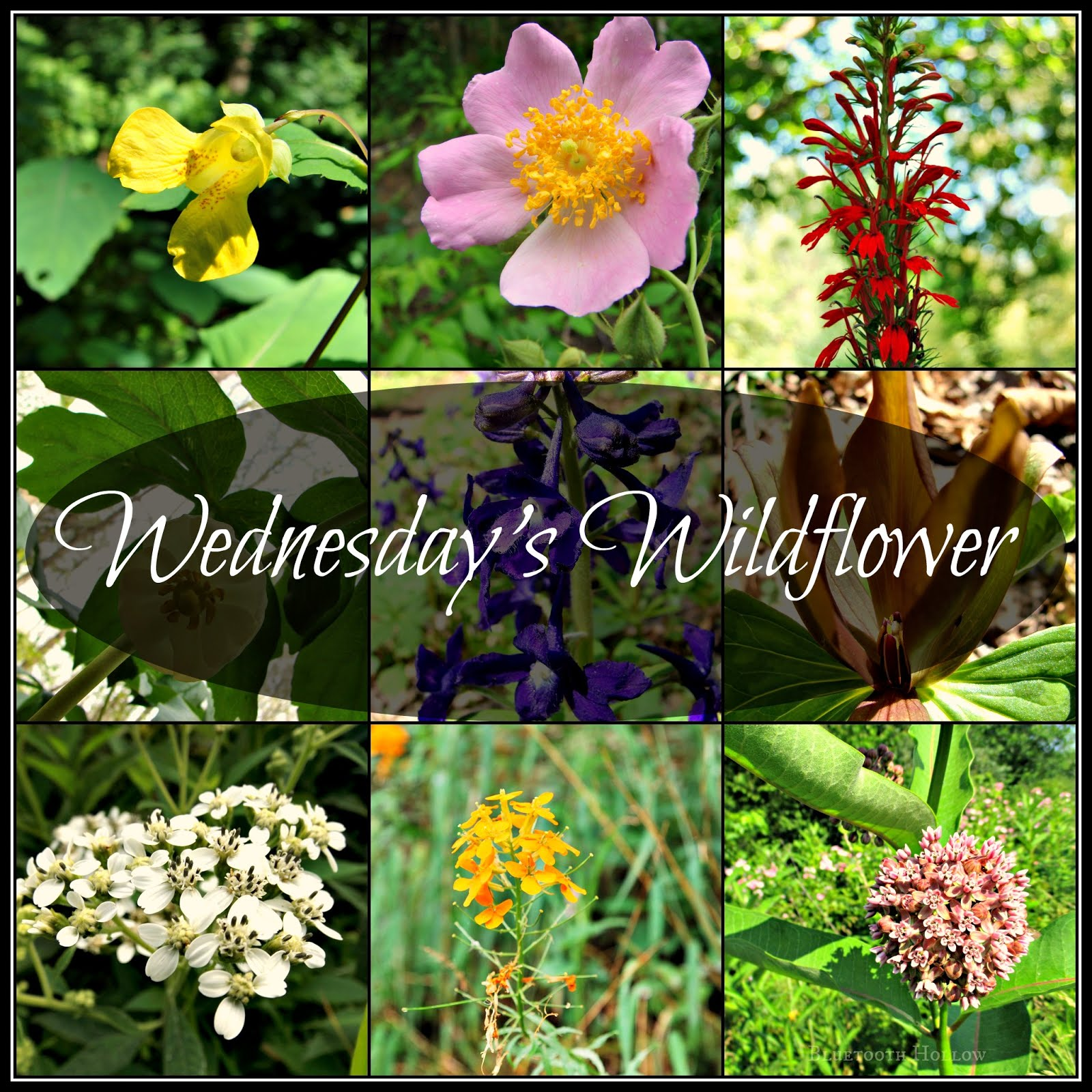 Wednesday's Wildflower Archive